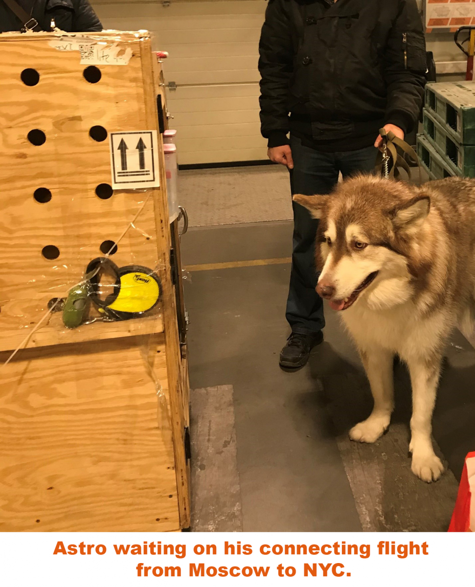 Air Animal shipping Astro to Moscow