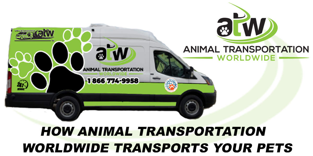 Air Animal Inc Pet Moving Services