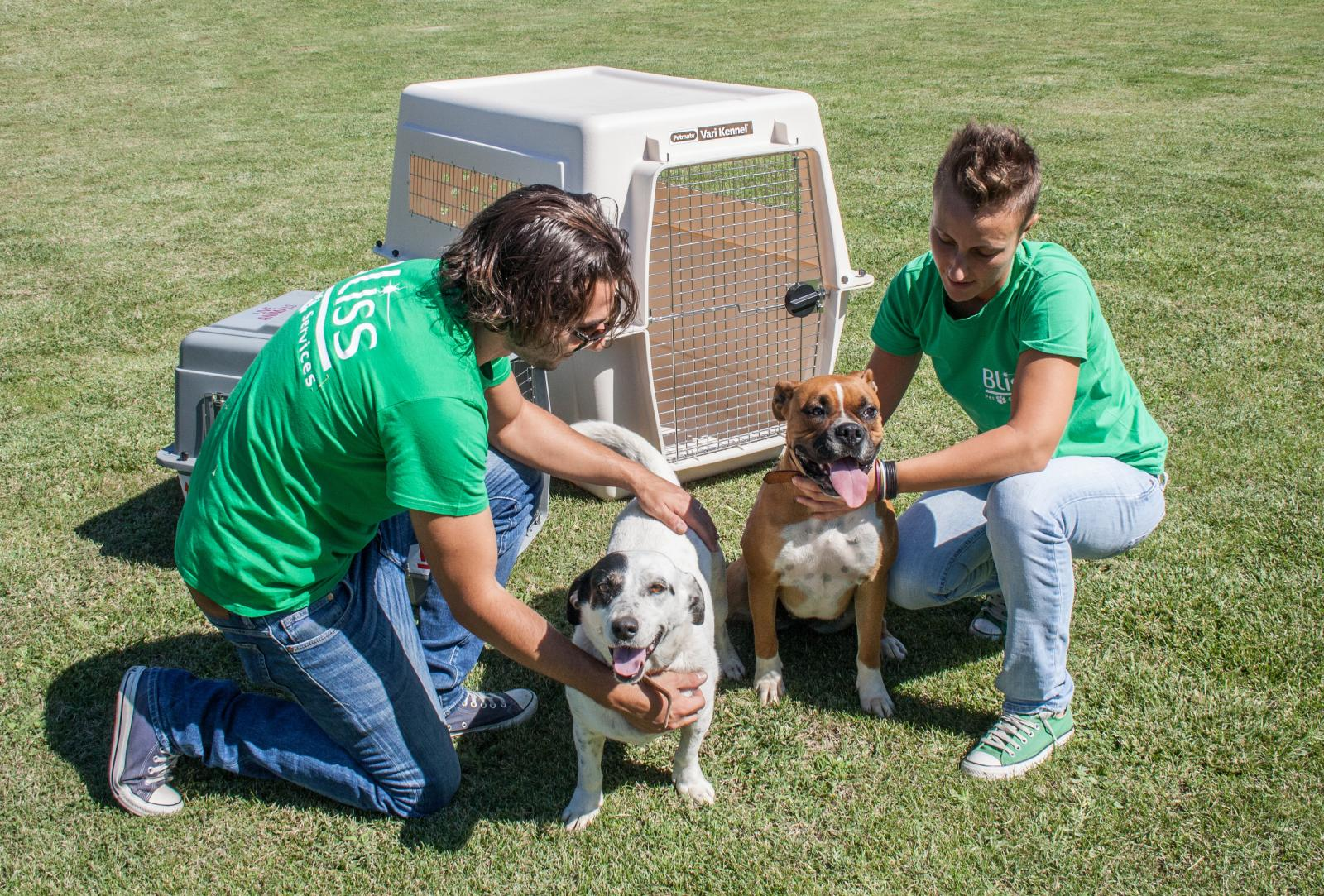 Worldwide Pet Relocation Safe Crates
