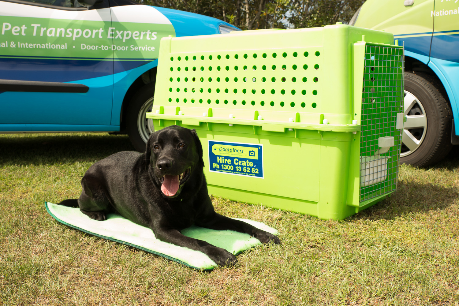 Dogtainers Pet Moving Crate