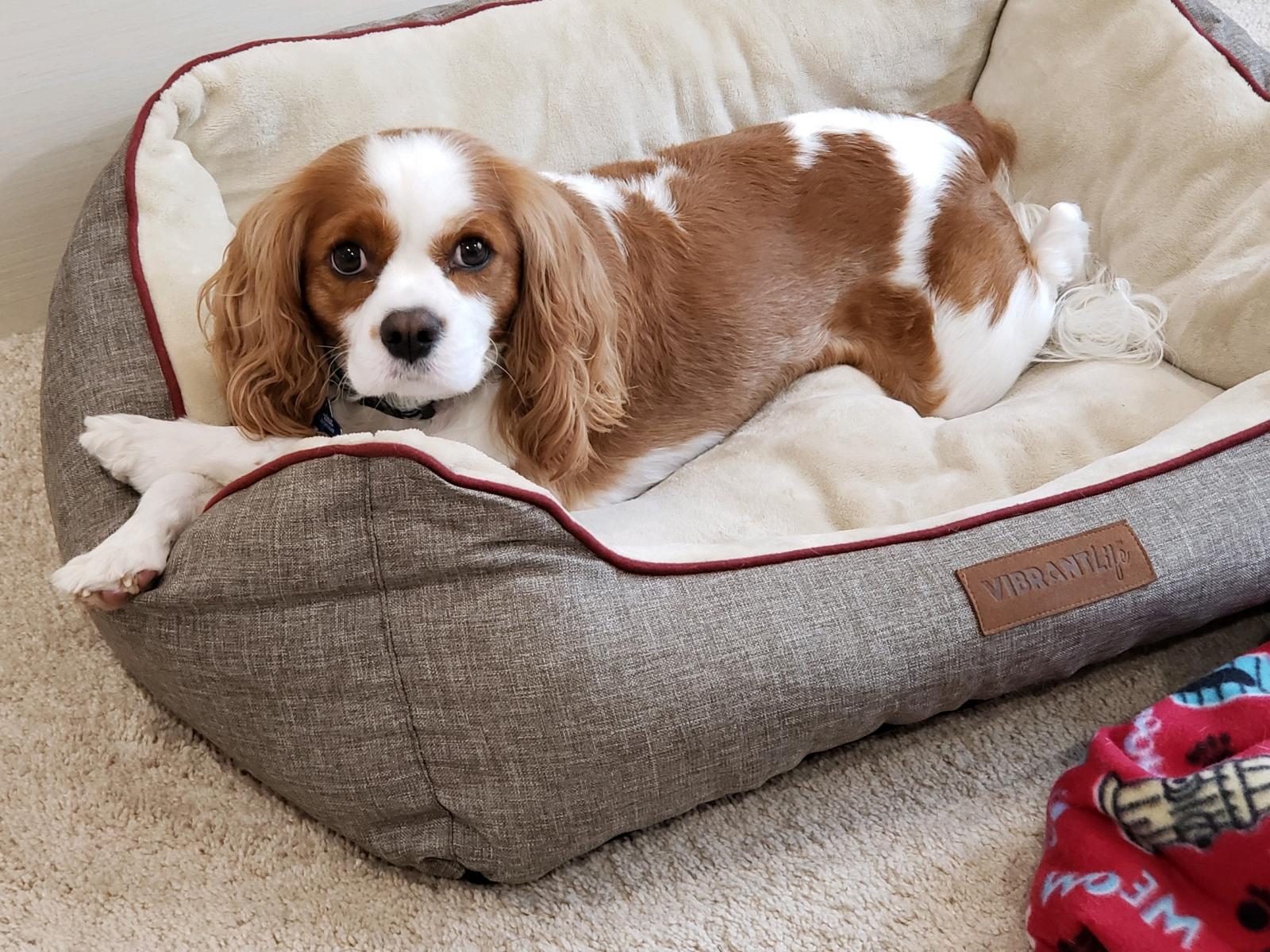 Happy Tails Pet Travel Dog