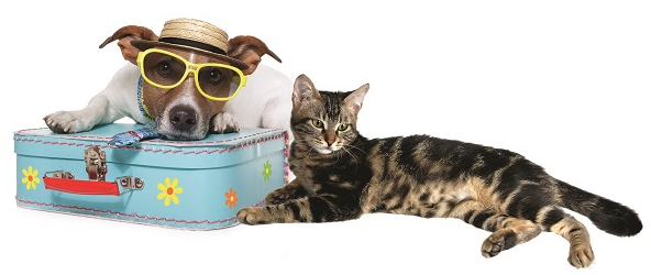 Dog and Cat Travel