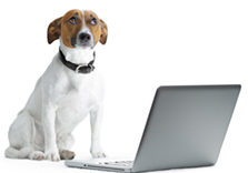 Beware of pet scams on the internet