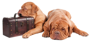 Moving with your pet? Keep them safe by using an IPATA member company.