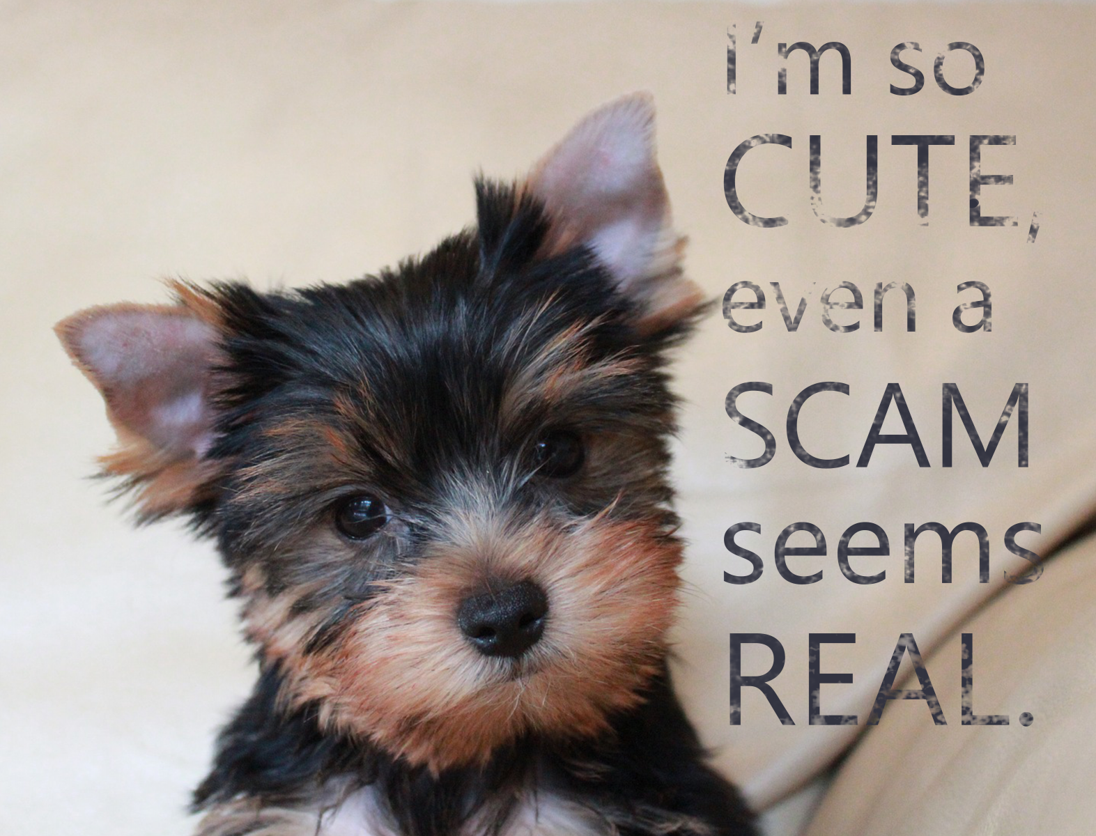 Teacup Puppy Scam