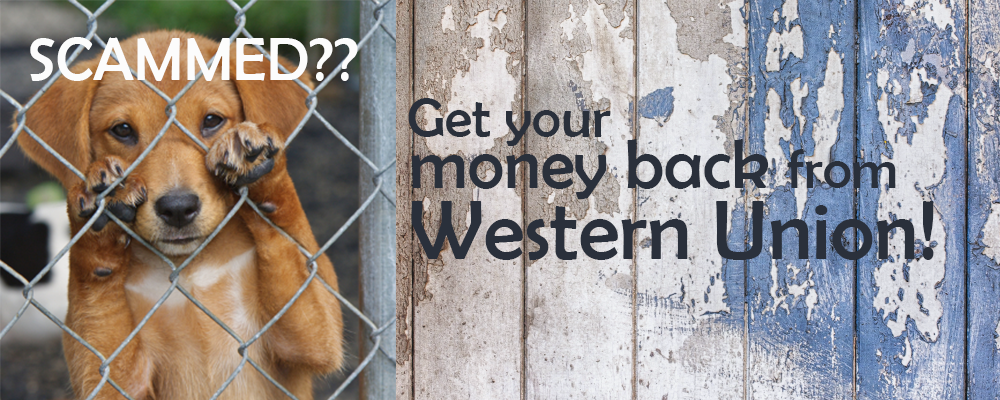 scammed? get your money back from western union