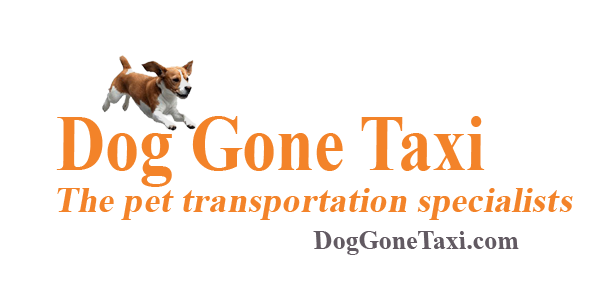 Dog Gone Taxi