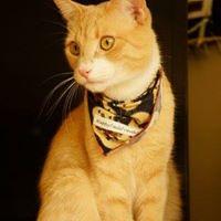 Happy Tails Pet Travel Cat