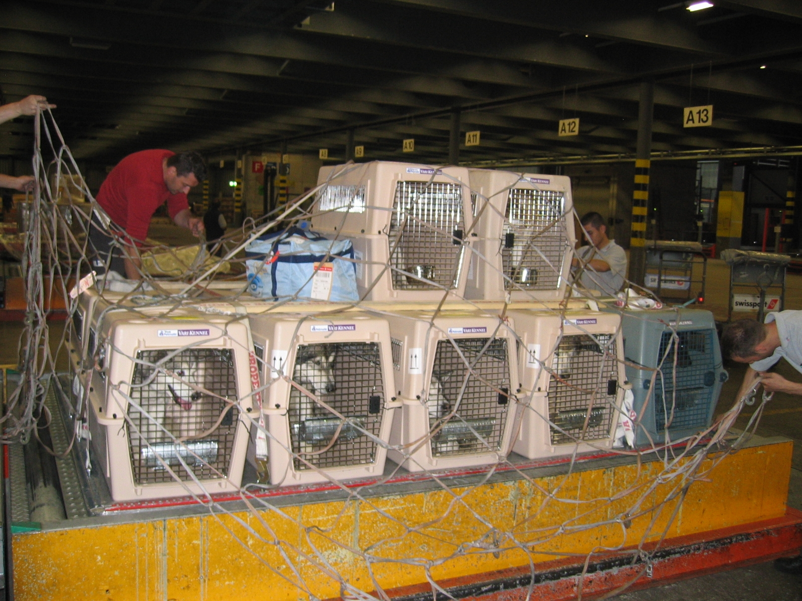 Pet Airlines shipping dogs all over the world.