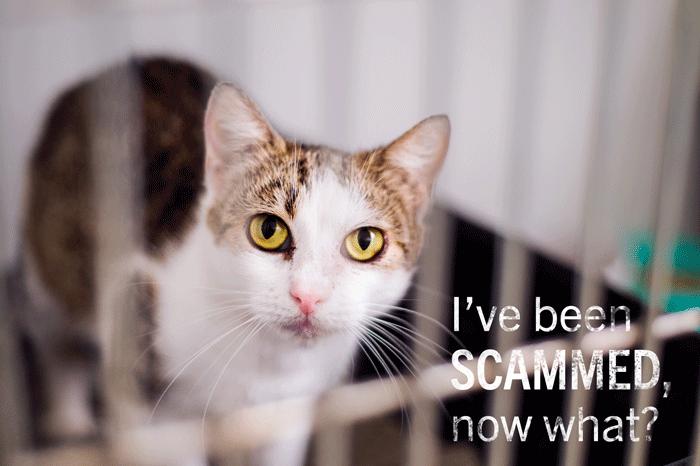 cat scam