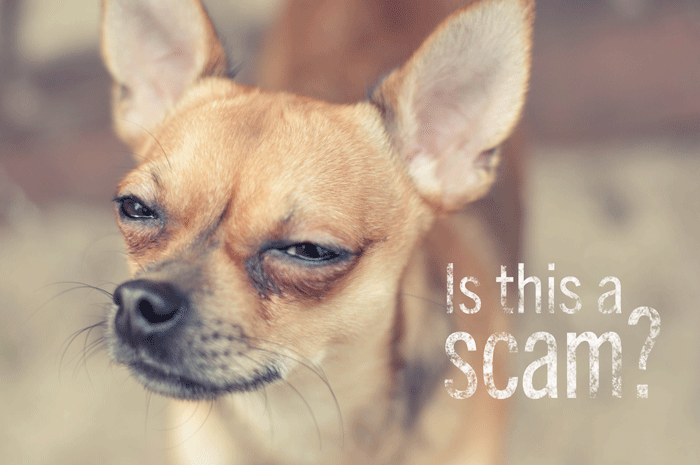 dog scam