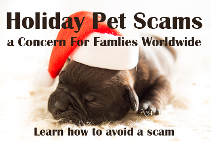 Holiday Pet Scams a Concern For Families Worldwide